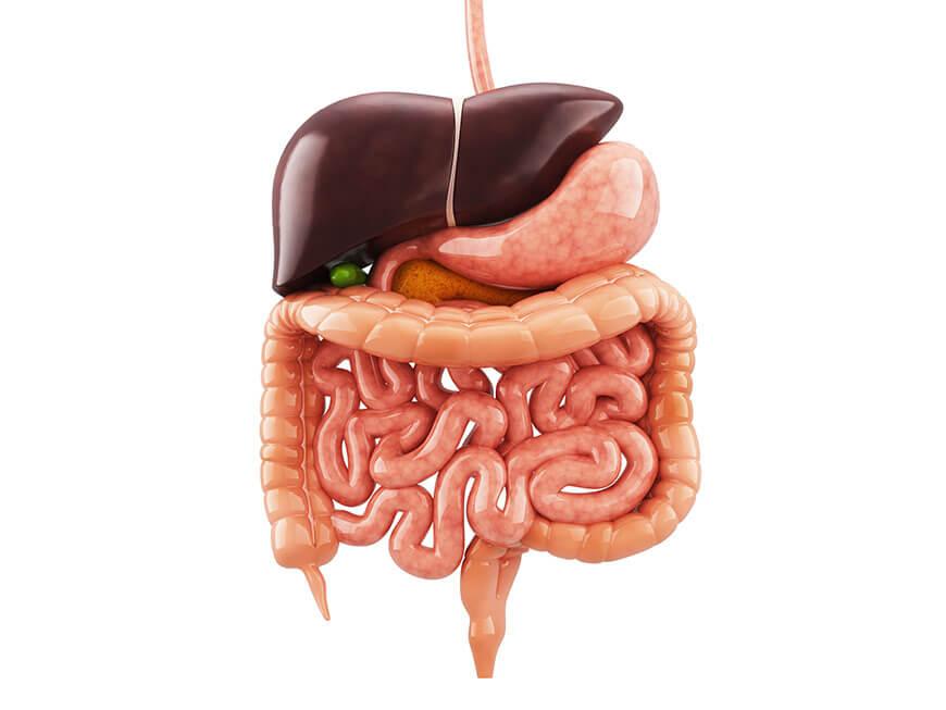sistema nervoso do intestino